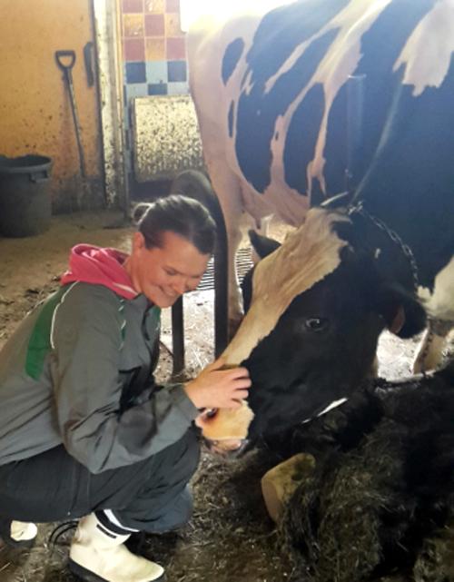 Nainen silittää mustankirjavaa lehmää päästä.